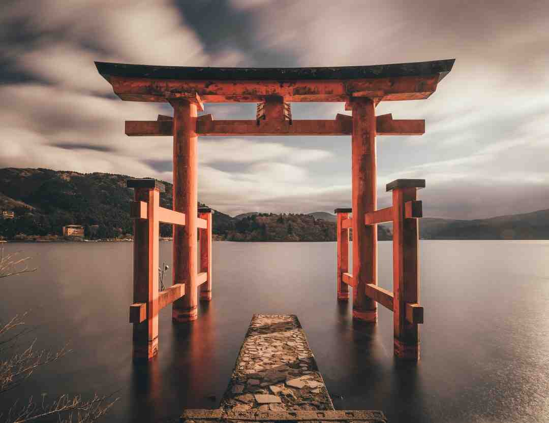 Erable du japon en pot