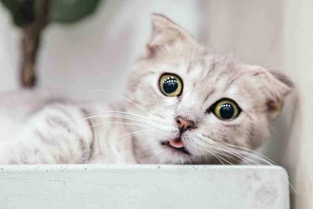 Comment les chats voient